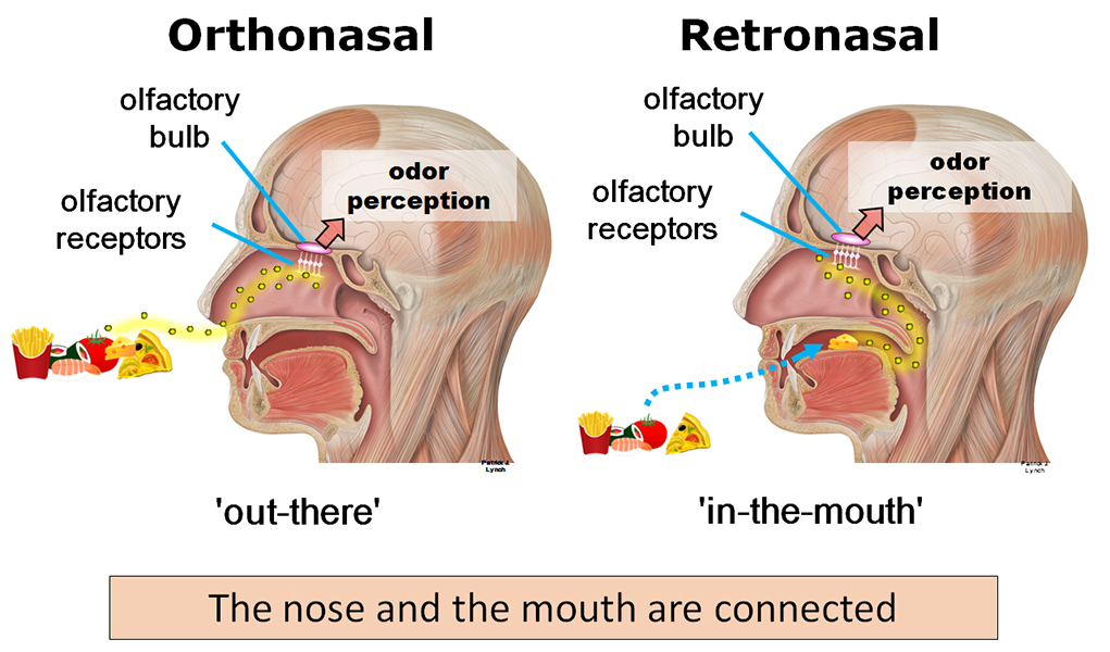 Orthonasal vs Retronasal